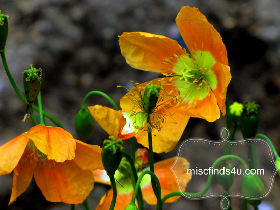 Paper Flowers - Orange