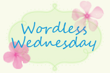 Click to see all of our Wordless Wednesday Entries