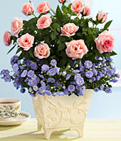 Win a $50 ProFlowers Gift Certificate from MiscFinds4u