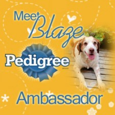 Blaze is a Pedigree Brand Dog Ambassador