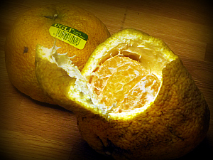 Ugli Fruit is indeed ugly, but oh so sweet and juicy!