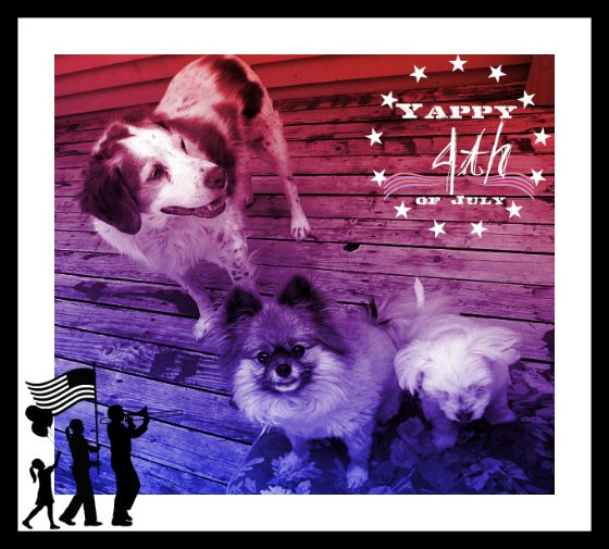 My Patriotic Pups Wishing you the best this 4th of July