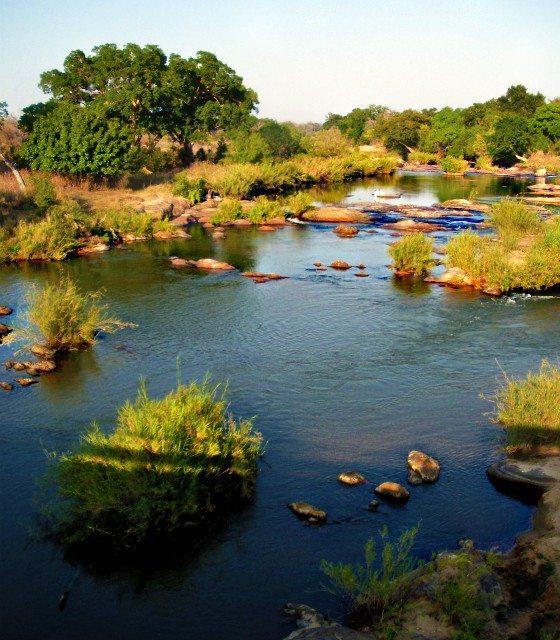 Photo of the Day: African Waterhole While on Safari