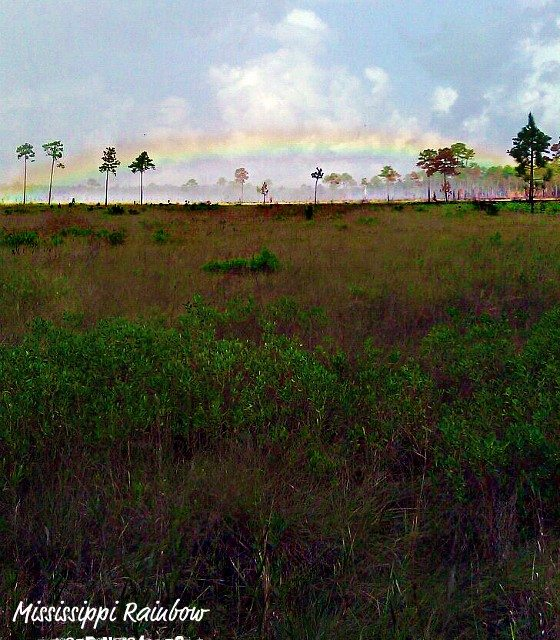 Photo of the Day:  Mississippi Savanna Rainbow