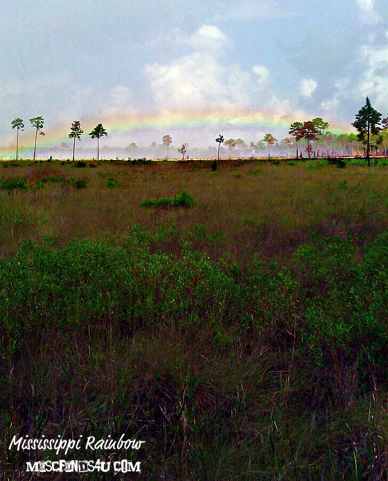 Mississippi Savanna Rainbow
