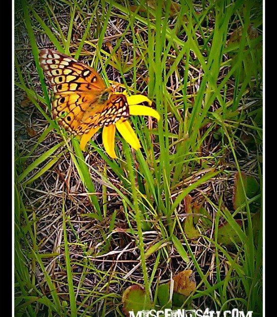 Photo of the Day: Butterfly on a Smallfruit Beggarticks Flower