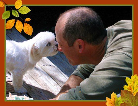 Maltese pup, cute dog photo