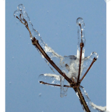 Seattle Ice Storm Photos - branches encased in ice