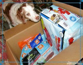 Blaze inspects the contents of the Mr Chewy package