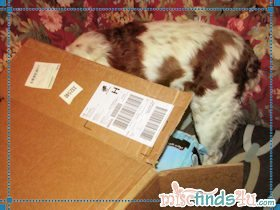 Blaze checking to see if the box really is empty
