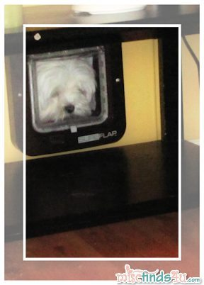 Our dog Gracie using her new SureFlap Microship Cat Door