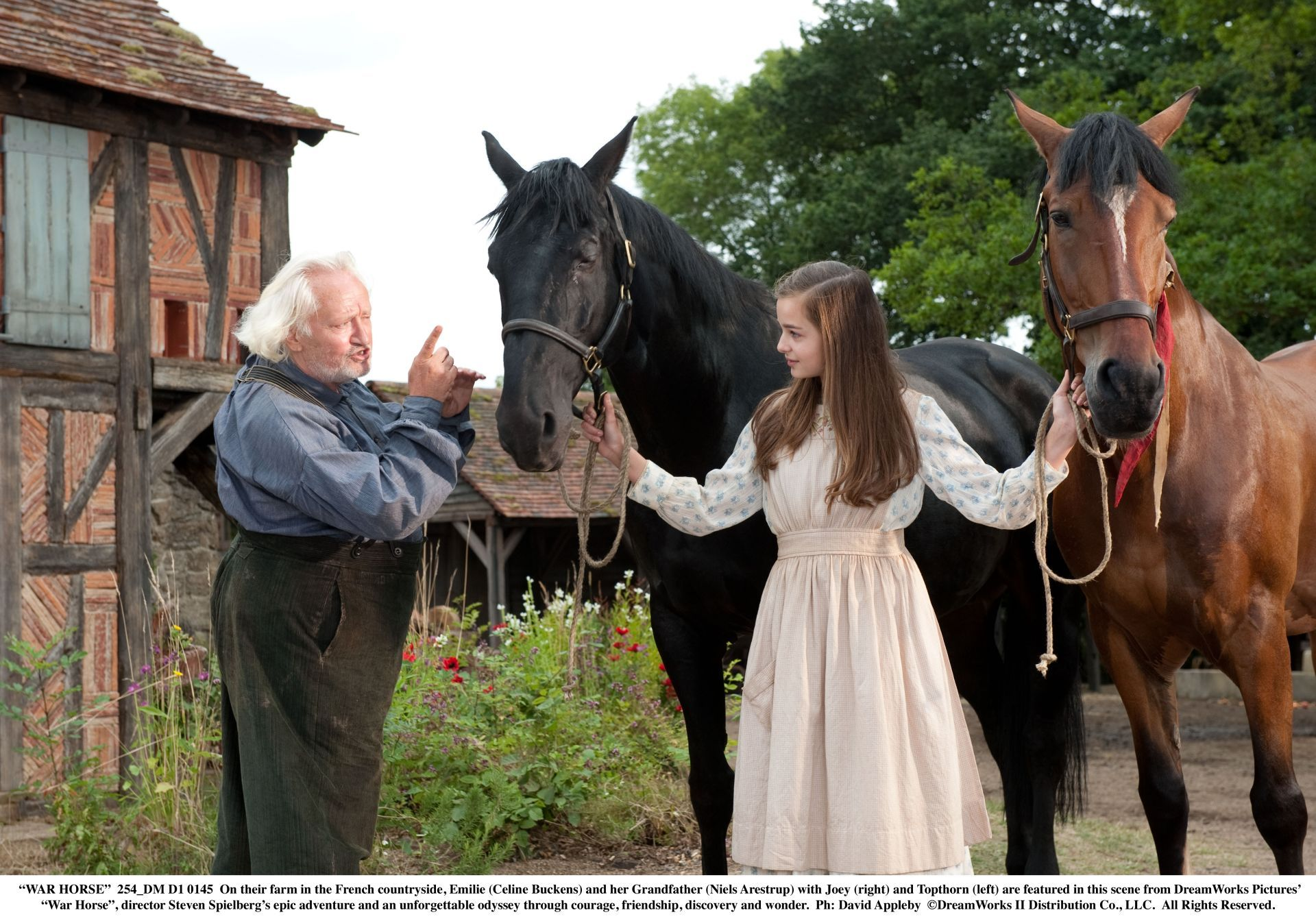 On their farm in the French countryside, Emilie (Celine Buckens) and her Grandfather (Niels Arestrup) with Joey (right) and Topthorn (left) - DreamWorks Pictures' 'War Horse' Photo: David Appleby. ©DreamWorks II Distribution Co., LLC. All Rights Reserved.