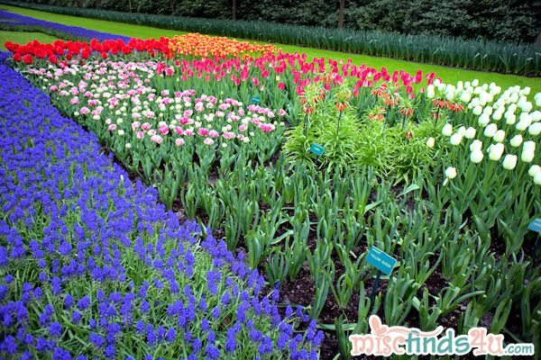 Photography: Amsterdam Tulip Garden May 2012