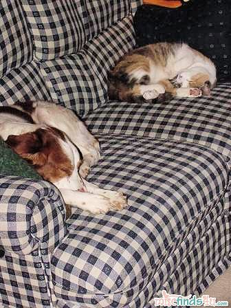 A young Blaze and our cat Pooh who fell ill and was euthenized last year - Probably 1999