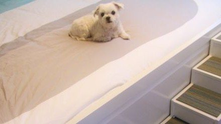 DIY Pet Stairs – Paint, Carpet, and Completion!