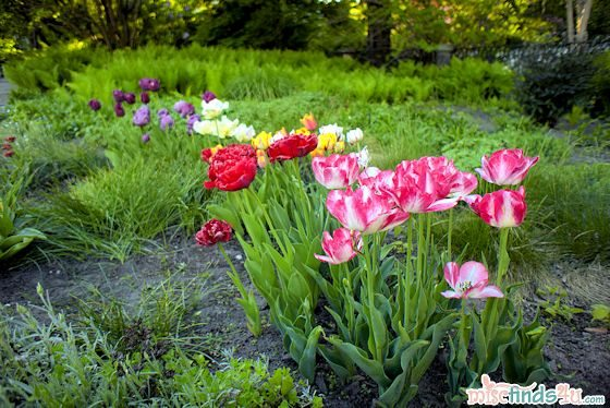 Travel Photo – Tulip Flowers and Landscape – Lazienki Park, Warsaw