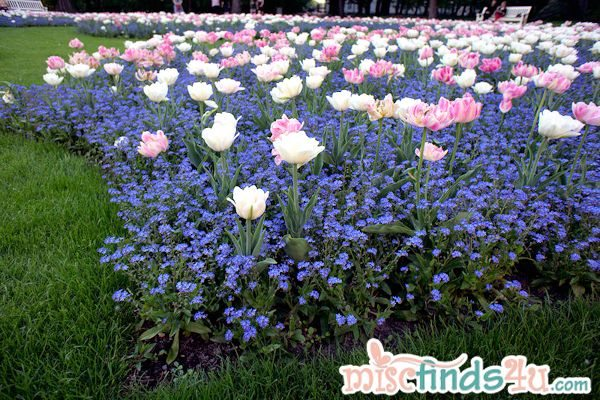 Pink, white, and blue flower bed in Warsaw, Poland