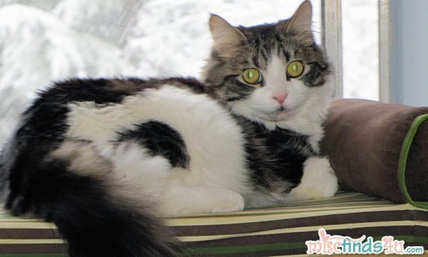 Purina Cat Chow Contest – Real Stories Project Reminder and Sam Update