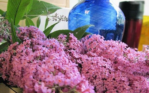 Garden: My Butterfly Bush is Blooming! Backyard Nature Oasis Update