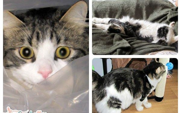 Sam's Story – Purina Cat Chow Contest – The Real Stories Project