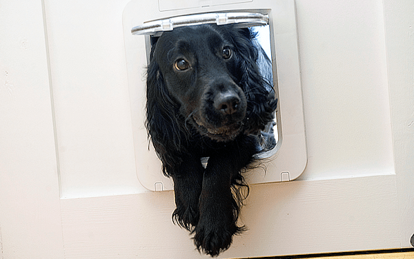 NEW SureFlap Microchip Pet Door Available for Small Dogs December 2012