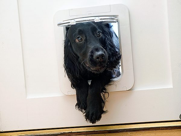SureFlap's New Pet Door for small dogs and large cats - available December 2012