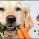 Feed Your Best Friend Better: Easy, Nutritious Meals and Treats for Dogs Review