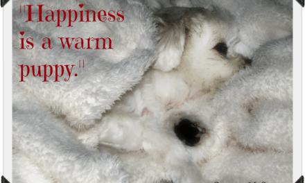 Dog Quote: Happiness is a Warm Puppy – Gracie's Favorite Blanket