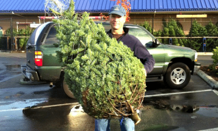 Christmas Tree Shopping – We've Gone Real!
