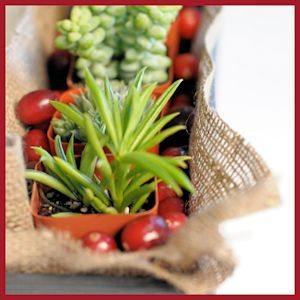 Succulent and Cranberry Natural Centerpiece by cupcakesandcashmere
