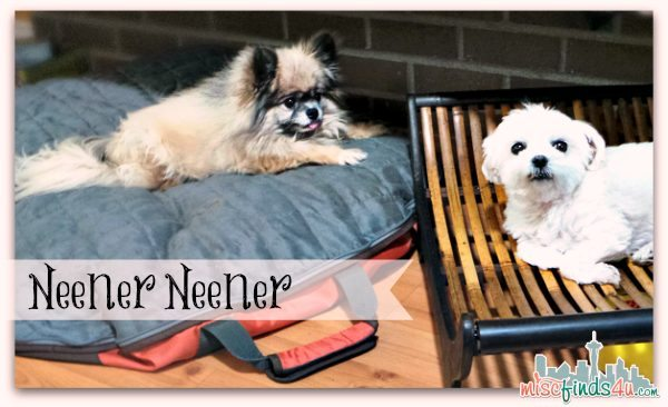 Summer Travel Deals - Dog Whisperer Travel Bed Sams Club