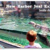 New Harbor Seal Exhibit at the Seattle Aquarium