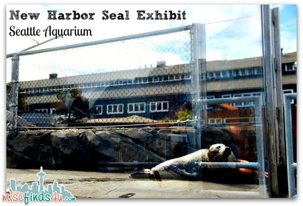 New Seal Exhibit Seattle - sunbathing seals