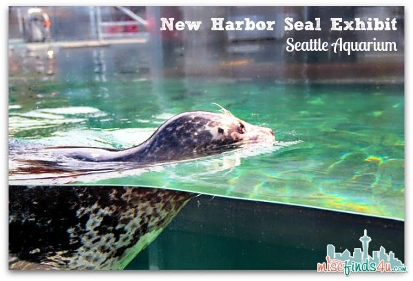 Seat New Harbor Seal Exhibit at the Seattle Aquarium