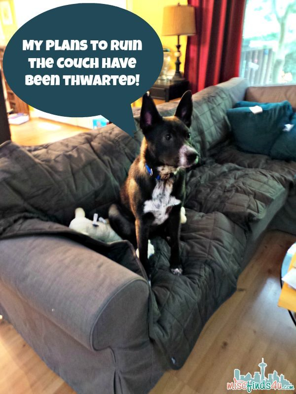 Surfit Pet Covers for the Home - ad