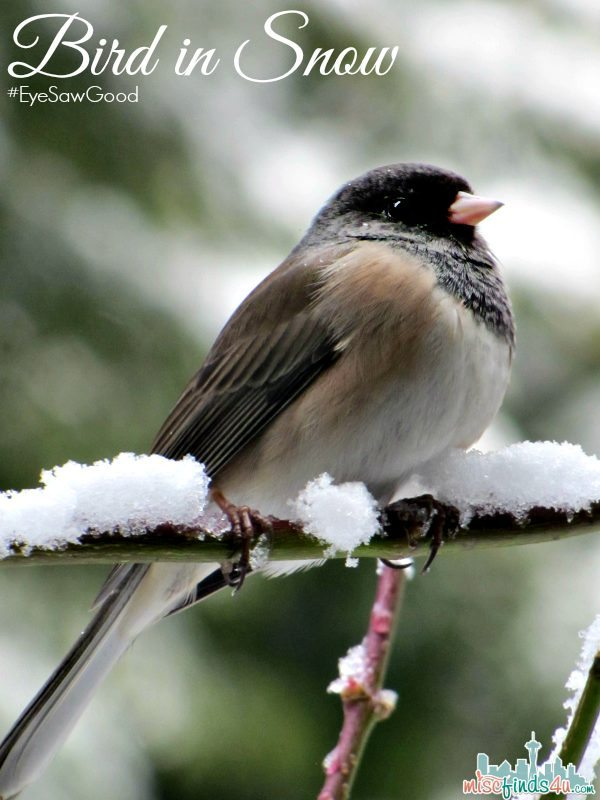 Bird in Snow - #EyeSawGood #MC Sponsored