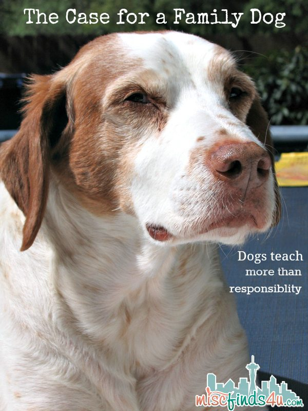 Blaze - The Case for a Family Dog - More than Learning Responsibility - ad #checkyourbag #naturaldogfood #lovemydogBlaze - The Case for a Family Dog - More than Learning Responsibility - ad #checkyourbag #naturaldogfood #lovemydog