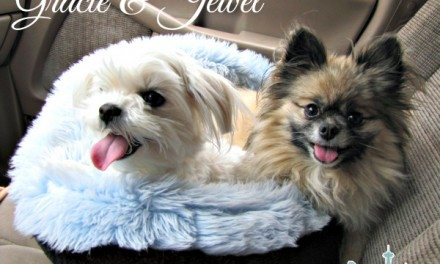 My Dogs: Why Healthy Dog Food Is Important to Me