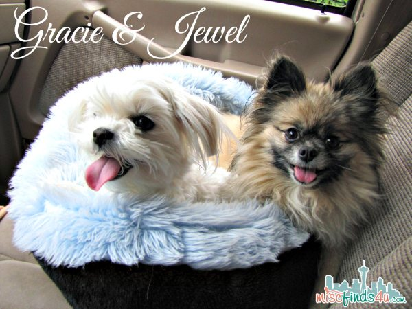Gracie and Jewel Riding in the Car headed for Vacation