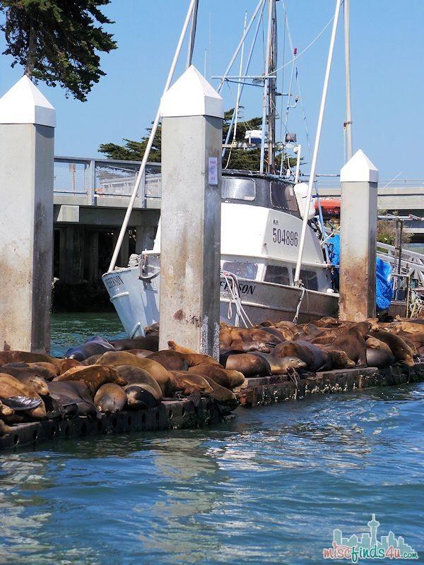 ELKHORN SLOUGH SAFARI GUIDED NATURE BOAT TOUR - Sea Lions