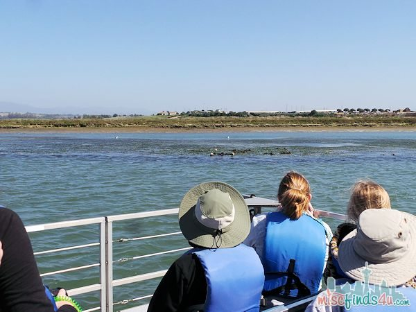 ELKHORN SLOUGH SAFARI GUIDED NATURE BOAT TOUR - animal viewing