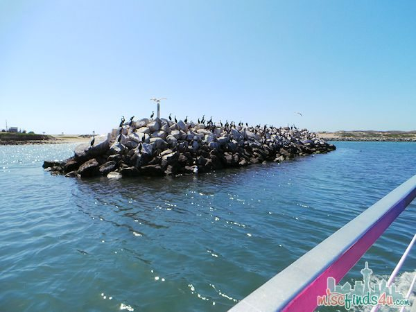 ELKHORN SLOUGH SAFARI GUIDED NATURE BOAT TOUR - birds
