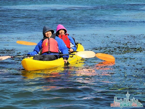 ELKHORN SLOUGH SAFARI GUIDED NATURE BOAT TOUR - kyakers