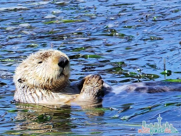 What to do in Monterey CA – Elkhorn Slough Safari Tour