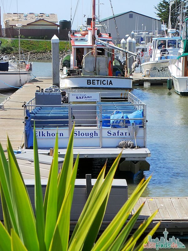 What to do in Monterey CA - ELKHORN SLOUGH SAFARI GUIDED NATURE BOAT TOUR - pontoon boat