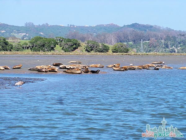 ELKHORN SLOUGH SAFARI GUIDED NATURE BOAT TOUR - seals sunbathing