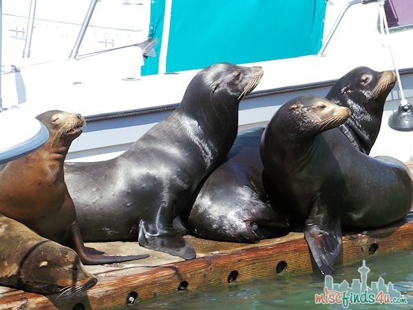 ELKHORN SLOUGH SAFARI GUIDED NATURE BOAT TOUR - sunbathing sea lions