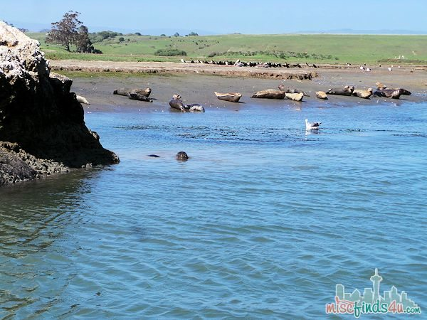 ELKHORN SLOUGH SAFARI GUIDED NATURE BOAT TOUR - views