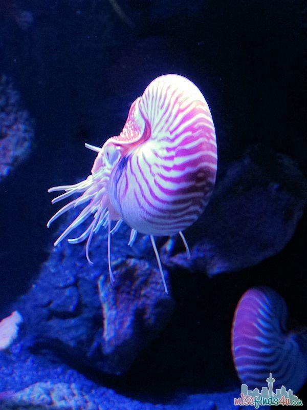 Monterey Aquarium Tentacles Exhibit - Cephalopod Tank