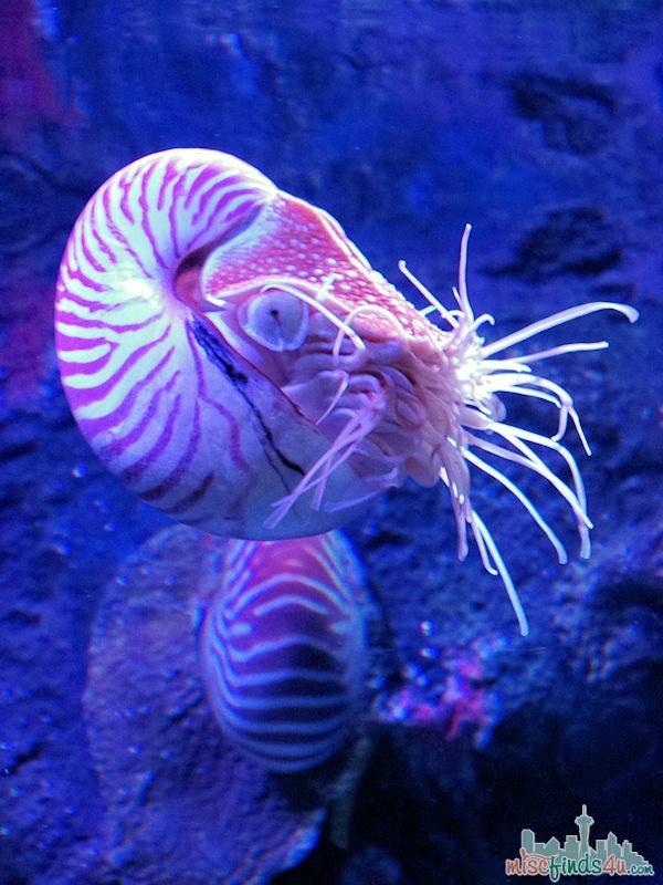 Monterey Aquarium Tentacles Exhibit - Cephalopods